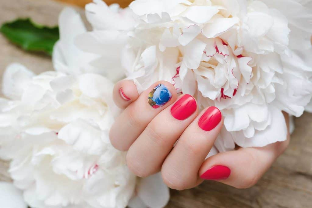 Beautiful female hand with red nail design holding white peony