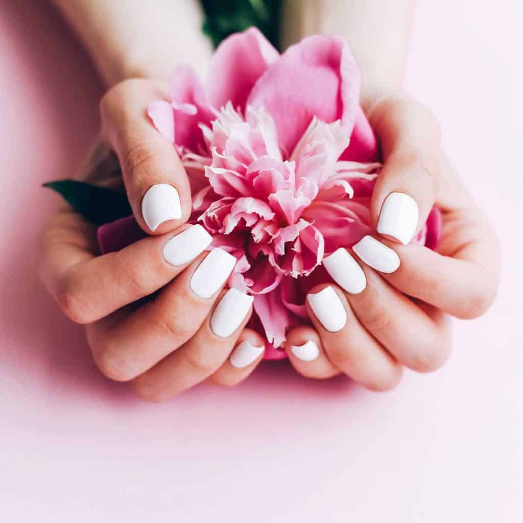 Female hands with white manicure holding a peony